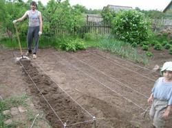 Наметили 3 узкие гряды длиной 4,5 метра. Вносим предпосевные удобрения